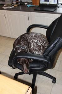Penny i kontorstol
