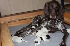 Penny med nyfødte valper 3